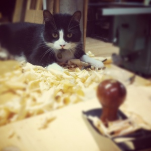 Taz likes to hang out in the fresh shavings. He's not even my cat.